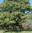 foto 2 - Fumone terreno agricolo olivato a Frosinone in Vendita