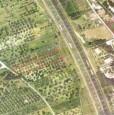 foto 1 - Mentana uliveto su terreno agricolo pianeggiante a Roma in Vendita