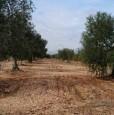 foto 2 - Toritto terreno con trulli da restaurare a Bari in Vendita