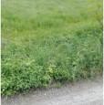 foto 0 - Pratola Peligna terreno agricolo pianeggiante a L'Aquila in Vendita