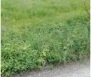 Annuncio vendita Pratola Peligna terreno agricolo pianeggiante