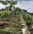 foto 20 - Carrara in località Fossola terreno agricolo a Massa-Carrara in Vendita