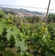 foto 18 - Carrara in località Fossola terreno agricolo a Massa-Carrara in Vendita