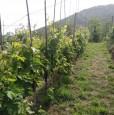 foto 17 - Carrara in località Fossola terreno agricolo a Massa-Carrara in Vendita