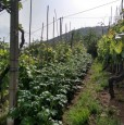 foto 14 - Carrara in località Fossola terreno agricolo a Massa-Carrara in Vendita