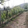 foto 13 - Carrara in località Fossola terreno agricolo a Massa-Carrara in Vendita