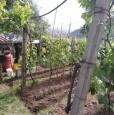 foto 11 - Carrara in località Fossola terreno agricolo a Massa-Carrara in Vendita