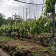 foto 9 - Carrara in località Fossola terreno agricolo a Massa-Carrara in Vendita