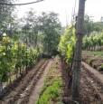 foto 7 - Carrara in località Fossola terreno agricolo a Massa-Carrara in Vendita