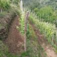 foto 6 - Carrara in località Fossola terreno agricolo a Massa-Carrara in Vendita