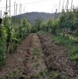 foto 5 - Carrara in località Fossola terreno agricolo a Massa-Carrara in Vendita