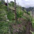 foto 4 - Carrara in località Fossola terreno agricolo a Massa-Carrara in Vendita