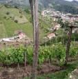 foto 3 - Carrara in località Fossola terreno agricolo a Massa-Carrara in Vendita