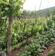 foto 2 - Carrara in località Fossola terreno agricolo a Massa-Carrara in Vendita