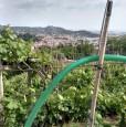 foto 1 - Carrara in località Fossola terreno agricolo a Massa-Carrara in Vendita
