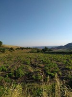 Annuncio vendita Rotondella terreni agricoli con casa