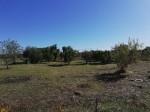 Annuncio vendita terreno agricolo non edificabile a Leverano