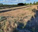 Annuncio vendita Leverano terreno agricolo