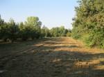 Annuncio vendita Carrù appezzamento di terreno agricolo irriguo