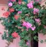 foto 2 - Triei in provincia di Ogliastra casa a Ogliastra in Vendita