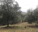 Annuncio vendita Scansano località Poggio Fagiano terreno