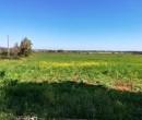 Annuncio vendita Nurra di Sassari azienda agricola