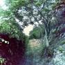 foto 43 - Cerveteri villa ecologica con ampio parco a Roma in Vendita