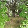 foto 32 - Cerveteri villa ecologica con ampio parco a Roma in Vendita