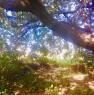 foto 30 - Cerveteri villa ecologica con ampio parco a Roma in Vendita