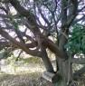 foto 29 - Cerveteri villa ecologica con ampio parco a Roma in Vendita