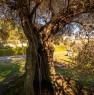 foto 4 - Cerveteri villa ecologica con ampio parco a Roma in Vendita
