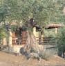 foto 12 - Pollina casa più terreno a Palermo in Vendita