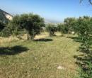 Annuncio vendita Marcellina terreno agricolo