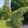 foto 7 - Selvazzano Dentro villa quartiere San Domenico a Padova in Vendita