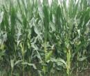 Annuncio vendita Codigoro azienda agricola