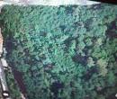 Annuncio vendita Pescia terreno boschivo