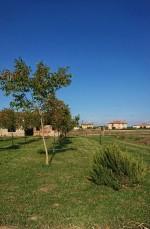 Annuncio vendita Badia Polesine rustico con terreno
