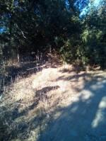 Annuncio vendita Cabras lotto di terra edificabile